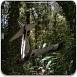 坠机逃离森林