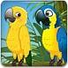 森林養鸚鵡
