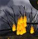 逃离着火的森林