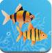 大鱼吃小鱼双人版2