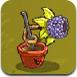 水果大戰害蟲3