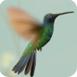 小鸟的微观世界